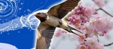«Летящая ласточка»